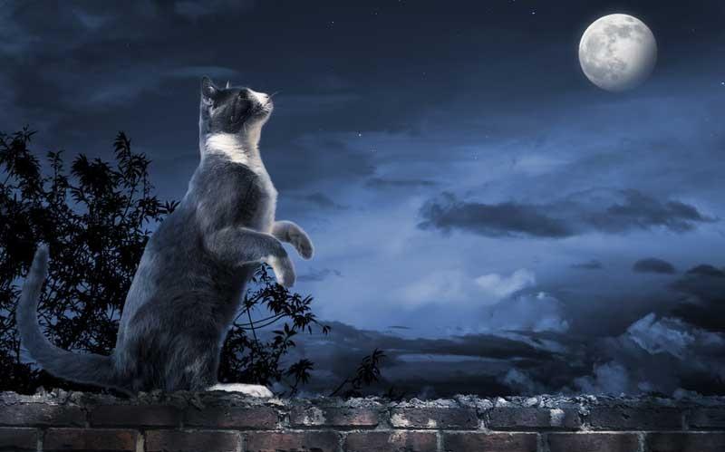 gatto caccia di notte