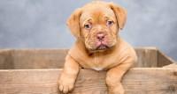 Foto Amiloidosi nel Cane: cause, sintomi e cure