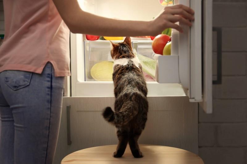 Foto Quale frutta può mangiare il Gatto? 20 verdure e frutti per Gatti