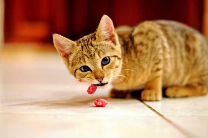 frutta gatto