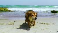cane medusa morso