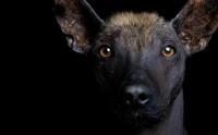 Foto 12 razze di Cani americani con foto
