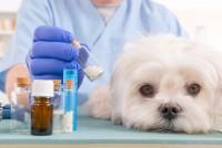 Foto Mancanza di calcio nei Cani: sintomi e soluzioni