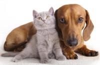 Foto Cane o gatto: chi è più intelligente? Scoprilo!