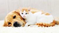 intelligenza cane o gatto