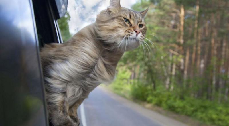 Foto Consigli per viaggiare con il gatto in auto