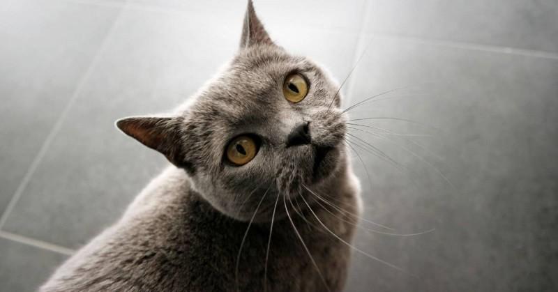 Foto I gatti riconoscono il loro nome ma preferiscono ignorarci