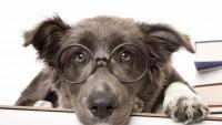 cane intelligente