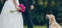 Foto Cane al Matrimonio? Ecco alcuni consigli