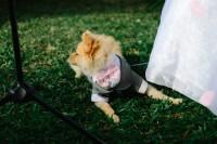 matrimonio vestiti cane