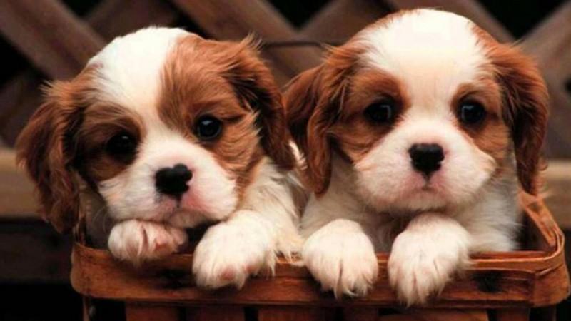 Foto Un cane può essere clonato?