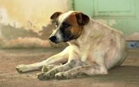 Foto Ho adottato un cane, e adesso?