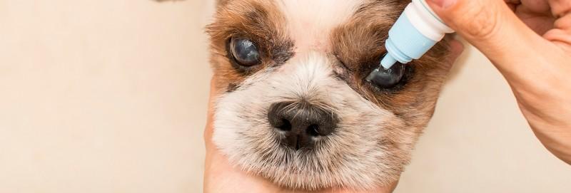 problemi vista cane