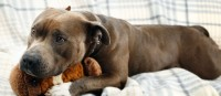 insufficienza renale cane