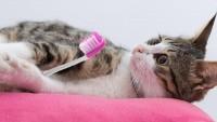 gatti denti da latte