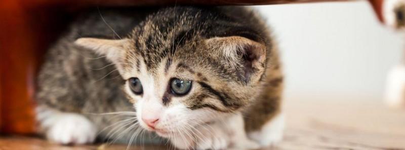 gattino nascosto