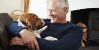 Zooterapia: animali domestici che aiutano le persone