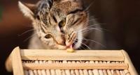 Foto Cosa contiene la saliva del Gatto?