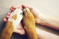 adottare cane in casa
