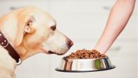 Foto Sostanze pericolose negli alimenti e cosmetici per cani