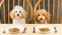 alimentazione cane tumore