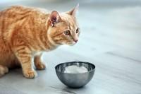 Foto Perchè al mio gatto non piace il cibo umido?