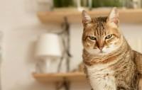 Foto I gatti preferiscono la vita notturna?