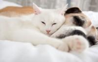 gatti sognano