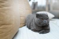 gatto monello