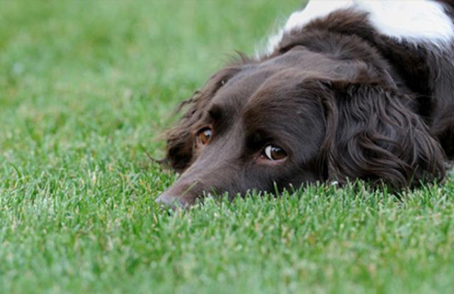 Foto Clomipramina - Farmaci per cani e gatti