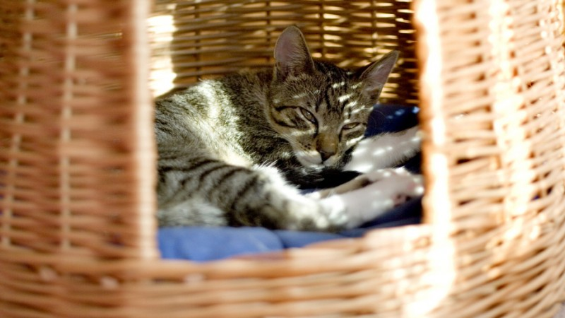 Foto Nascondigli pericolosi per un Gatto