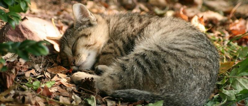 nascondiglio per gatti