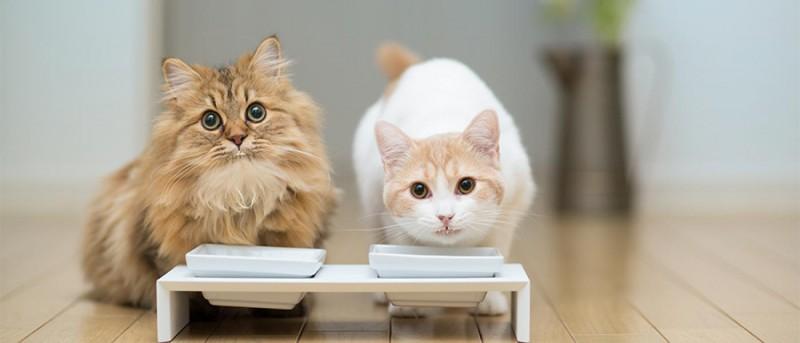 cibo per gatti caldo o freddo