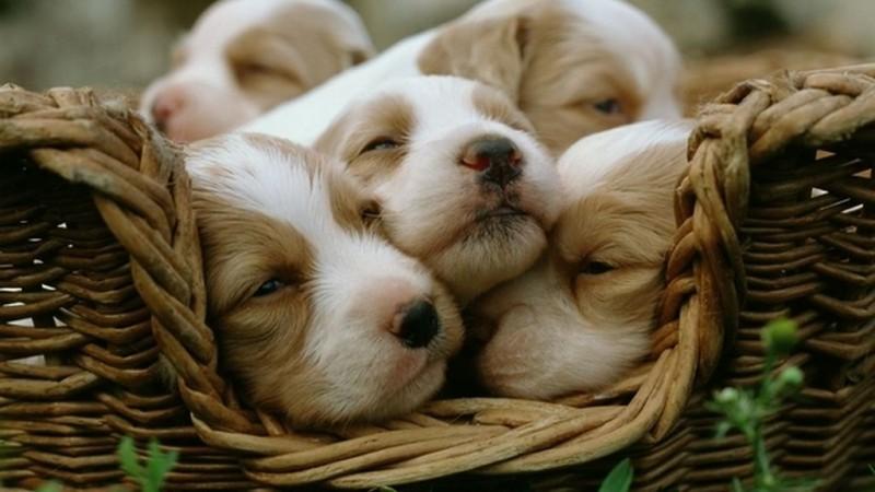 Foto Quante razze di cani ci sono nel mondo?