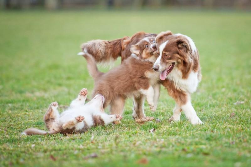 razze canine mondiali