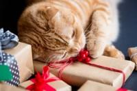 regalo per un gatto