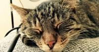 gatto seduttore