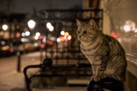 gatto alla finestra