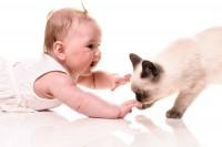 Foto Gatto e neonato - Come fare?