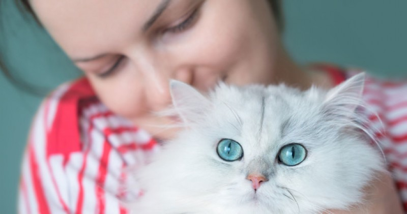 gatto amorevole