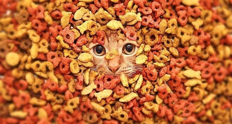 Foto La migliore crocchetta per il tuo gatto
