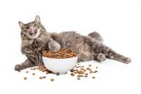 crocchette migliori gatto