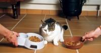 scegliere cibo per gatti