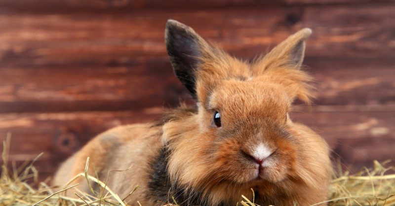 coniglio starnutisce cause