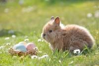 Foto Perché il mio coniglio starnutisce?