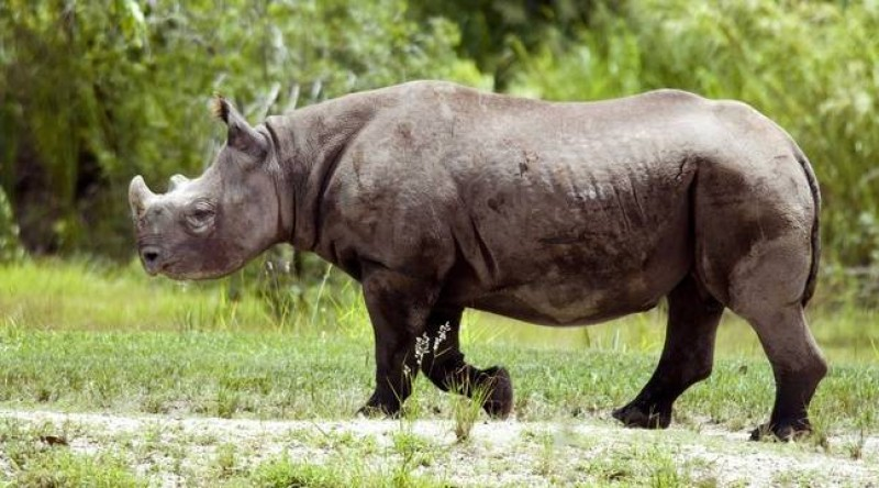 fausta rinoceronte morto tanzania