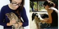 Foto Cavalli, cani, gatti, conigli... In Normandia, questo osteopata cura gli animali