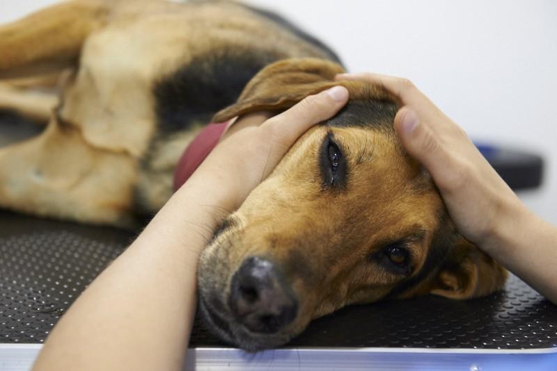 Foto Osteopatia canina: quali benefici per il Cane?