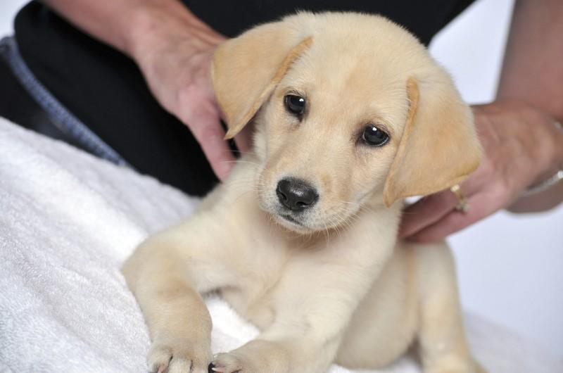 seduta osteopatia cane