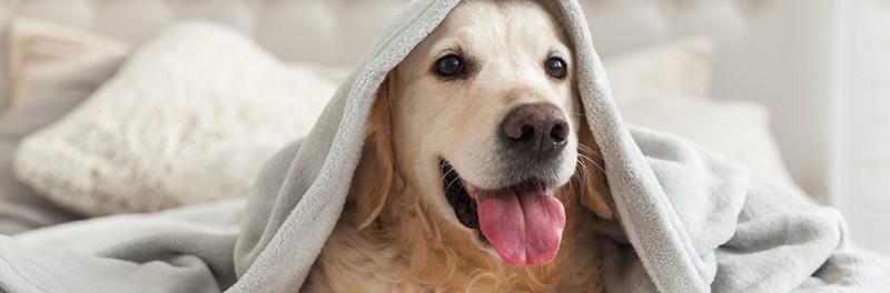 osteopatia cane